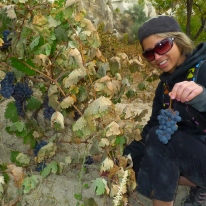 Plucking Cappadocian grapes from the vine.