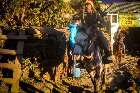 A young Nepali boy takes on the task of breaking a horse.